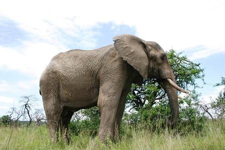 olifant safarireizen
